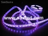 5050 led lighting strips, Christmas lighting, 60LEDs/m, flexible, factory price
