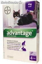 Bayer Advantage 80 Gatos Pipetas 4 UD.