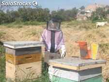 Beekeeping Cloth(Jacket) with Hood / Chamarra con verlo para Apicultor