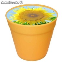 Business Pot Sun, Mini-Sunflower