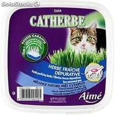 Catherbe a chat anifa