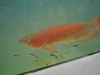Chili Red Super Red Disponible Arowanas - Poisson à vendre