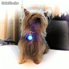 Colgantes luminosos, led, para mascotas