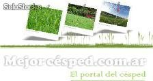 Fertilizante Urea - venta - fertilizantes