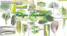 Follajes Tropicales