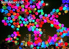 globos y luces led