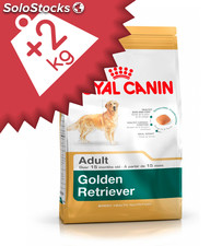 Golden Retriever Adulto 14.00 Kg