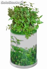 Herbs Power Can 65 X 90 Mm, Mixture Of Herbs