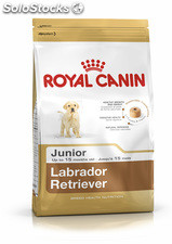 Labrador Retriever Junior 14.00 Kg