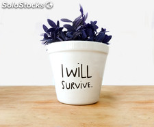 Maceta original para planta 'I will survive'