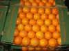 Oranges maltaises calibre 5 et 8 - Photo 2