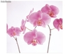 Papier peint photo avec colle: pink orchid