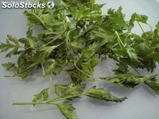 Perejil Liofiizado / Freeze Dried Parsley