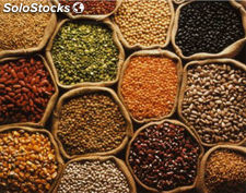 Pulses (Chickpeas, Lentils, Dhals, Kidney Beans, Pigeon Peas, Yellow Peas, Mung)