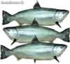 Salmon Whole Grade 3-4 KG cada uno