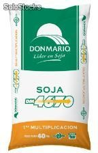 Soja DM 4670 - semillas