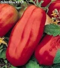 tomate gigante super steak frutos hasta 1 kg envase de 120 semillas. Black Bedroom Furniture Sets. Home Design Ideas