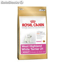 West Highland White Terrier Adult 3.00 Kg